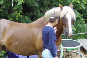 Pferde-Coaching live
