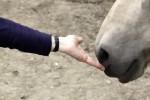 Pferdecoaching: Impuse für Verhalten